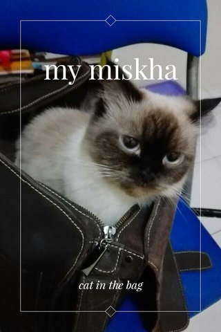 my miskha cat in the bag
