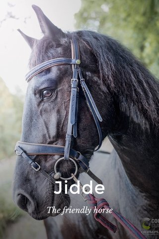 Jidde The friendly horse