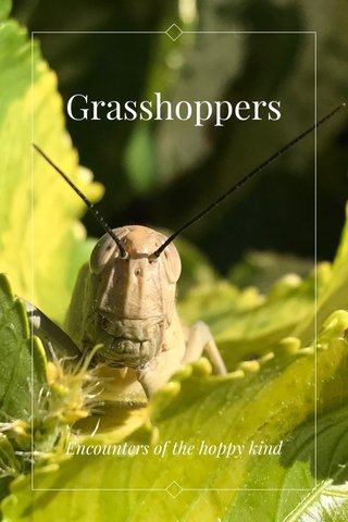 Grasshoppers Encounters of the hoppy kind