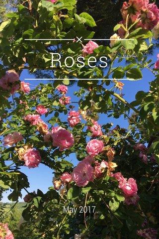 Roses May 2017