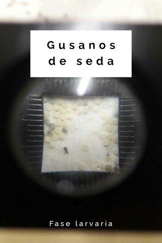 Gusanos de seda Fase larvaria