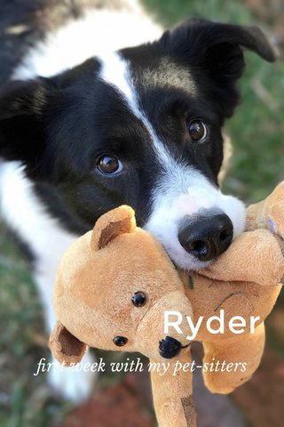 Ryder first week with my pet-sitters