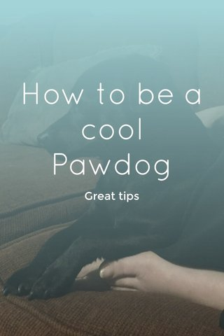 How to be a cool Pawdog Great tips