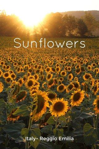 Sunflowers Italy- Reggio Emilia