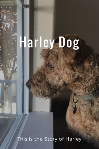 Harley Dog This is the Story of Harley