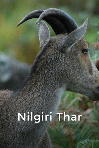 Nilgiri Thar