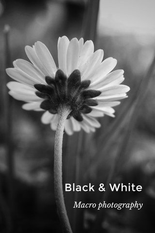 Black & White Macro photography