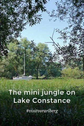 The mini jungle on Lake Constance #visitvorarlberg