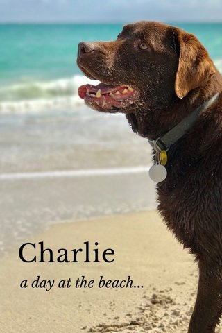 Charlie a day at the beach...