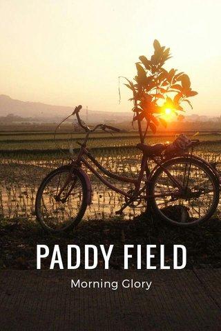 PADDY FIELD Morning Glory
