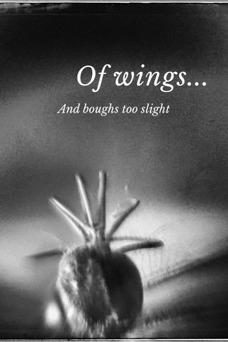 Of wings... And boughs too slight