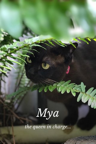 Mya the queen in charge...