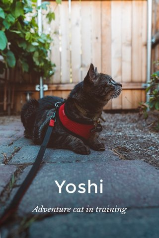 Yoshi Adventure cat in training