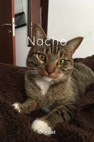 Nacho Our cat