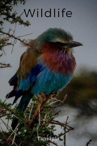 Wildlife Tansania