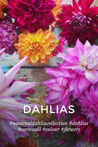 DAHLIAS #nationaldahliacollection #dahlias #cornwall #colour #flowers