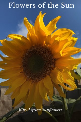 Flowers of the Sun Why I grow Sunflowers
