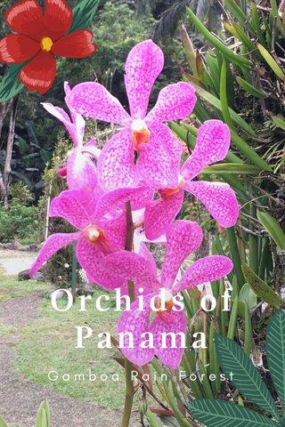 Orchids of Panama Gamboa Rain Forest