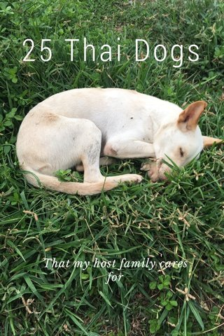 25 Thai Dogs That my host family cares for
