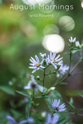August Mornings wild flowers