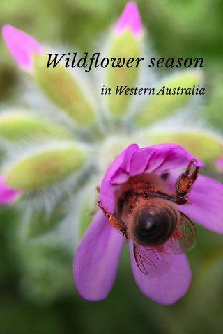 Wildflower season in Western Australia