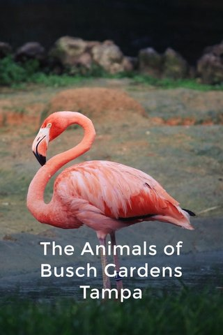 The Animals of Busch Gardens Tampa