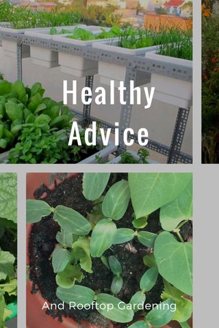 Healthy Advice And Rooftop Gardening