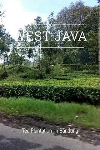 WEST JAVA Tea Plantation in Bandung