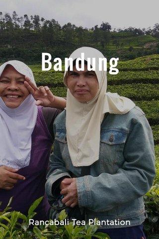Bandung Rancabali Tea Plantation