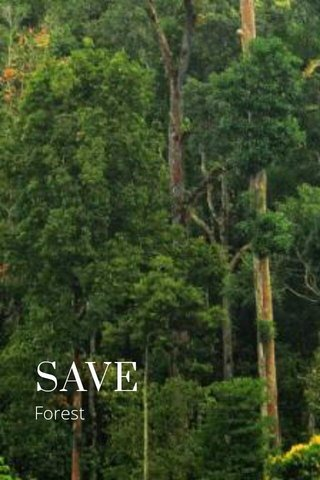SAVE Forest