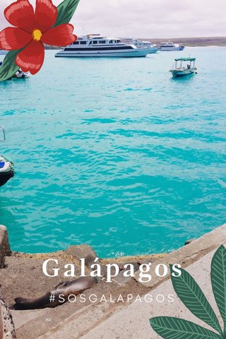 Galápagos #SOSGALAPAGOS