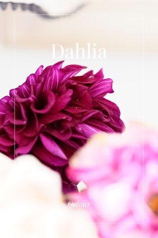 Dahlia Colour