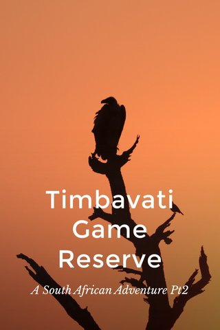 Timbavati Game Reserve A South African Adventure Pt2