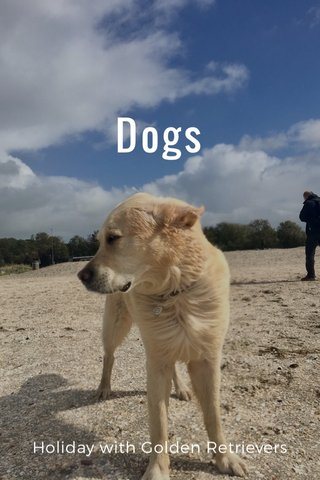Dogs Holiday with Golden Retrievers