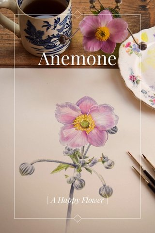 Anemone | A Happy Flower |
