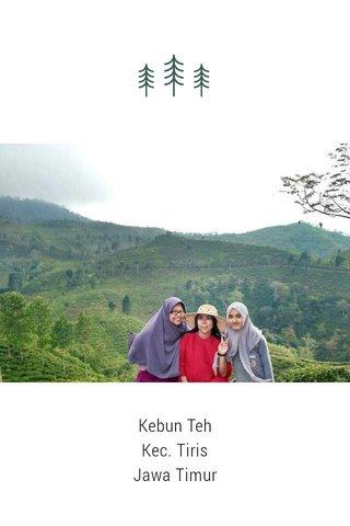 Kebun Teh Kec. Tiris Jawa Timur