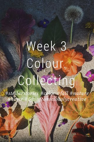 Week 3 Colour. Collecting #stellarstories #color #fall #nature #home #5ftinfconsciouslycreative
