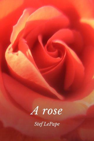 A rose Stef LePape