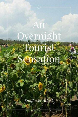 An Overnight Tourist Sensation Sunflower Attack