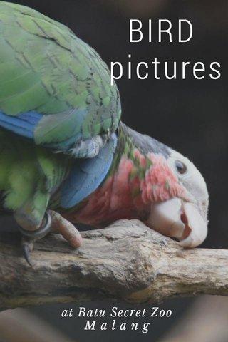 BIRD pictures at Batu Secret Zoo M a l a n g