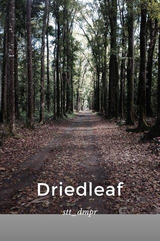 Driedleaf stt_dmpr