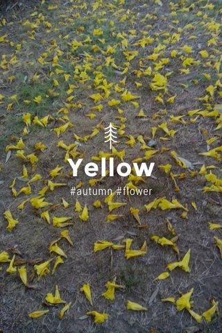 Yellow #autumn #flower