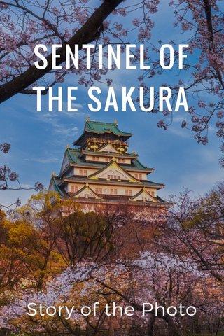 SENTINEL OF THE SAKURA Story of the Photo