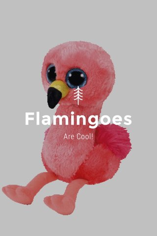 Flamingoes Are Cool!