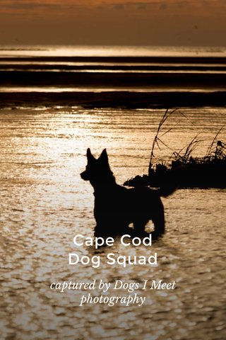 Cape Cod Dog Squad captured by Dogs I Meet photography