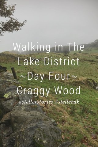 Walking in The Lake District ~Day Four~ Craggy Wood #stellerstories #stelleruk