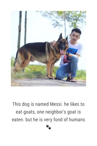 This dog is named Messi. he likes to eat goats, one neighbor's goat is eaten. but he is very fond of humans 🐾