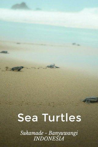 Sea Turtles Sukamade - Banyuwangi INDONESIA