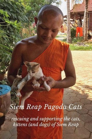 Siem Reap Pagoda Cats rescuing and supporting the cats, kittens (and dogs) of Siem Reap