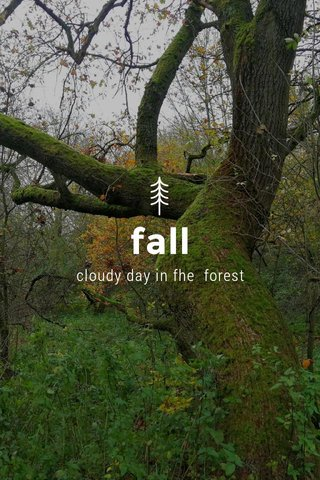 fall cloudy day in fhe forest